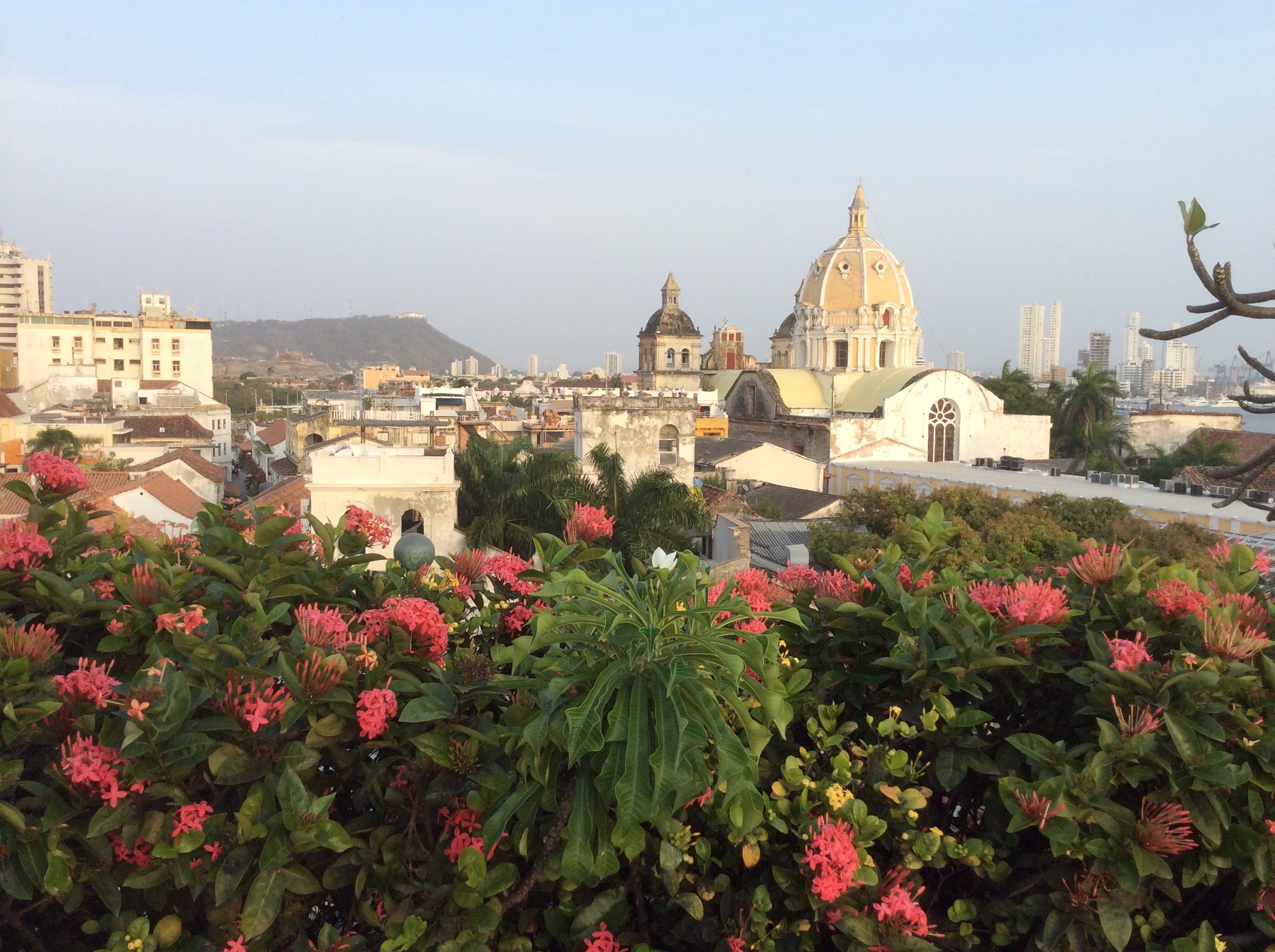 Cartagena de Indias views of the city with pink flowers in the foreground.
