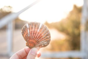Scallop Shell, Nantucket Bay Scallop, Nantucket Fall