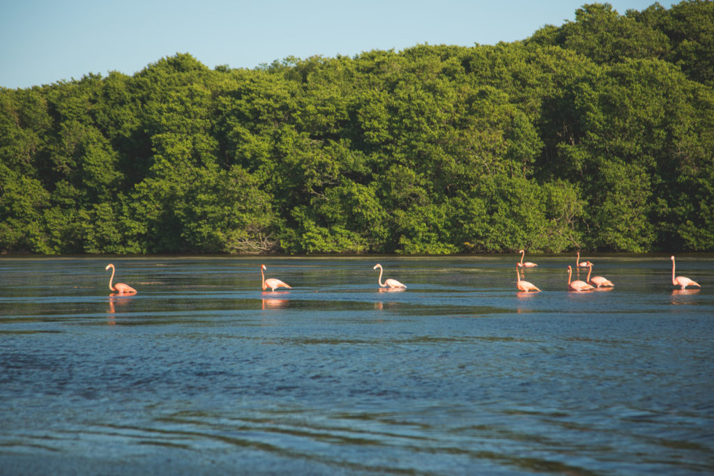 Living in Mérida or just visiting there are many day trips. Celestun is where you can find the flamingos in fall and spring.